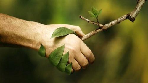 La Naturopathie : philosophie et art de vivre